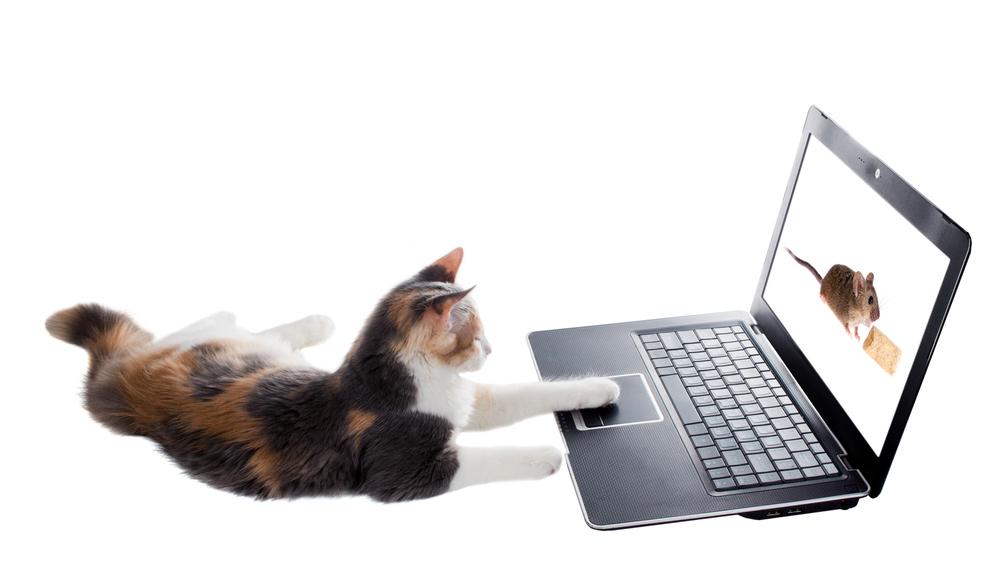 wifi cat warkitteh